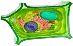 Plant Cell 05sm